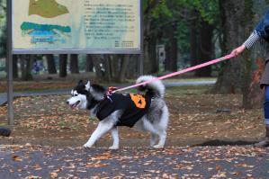 yoyogi_20121028_1 (31)
