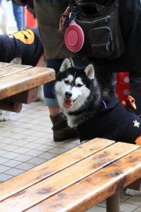 yoyogi_20121028_1 (44)