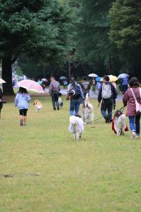 yoyogi_20121028_2 (15)