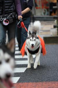 yoyogi_20121028_2 (30)