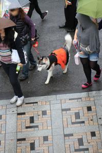 yoyogi_20121028_2 (43)