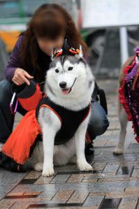 yoyogi_20121028_3 (14)