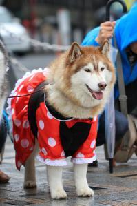 yoyogi_20121028_3 (20)
