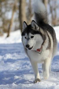 20120104_Dog_vac (39)