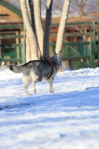 20120104_Dog_vac (66)