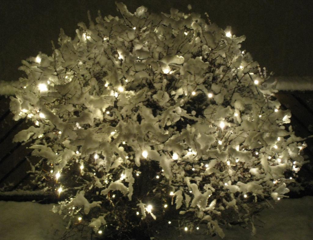 grandavegur_snow_tree.jpg