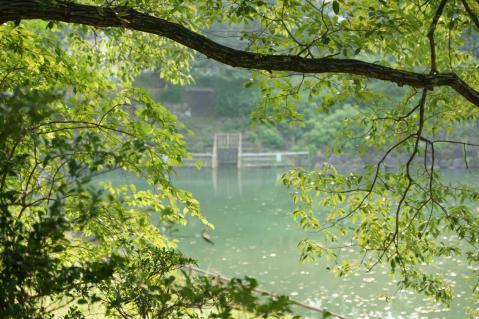 ヒル池20120729-3