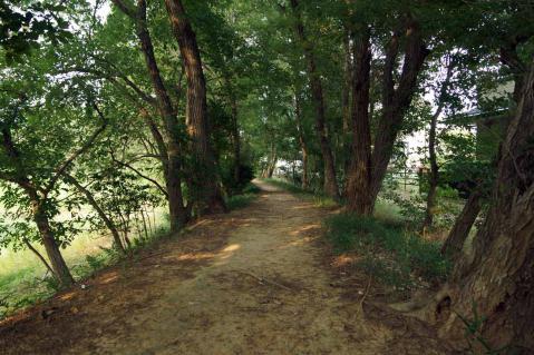 ヒル池20120729-2