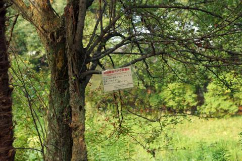 ヒル池20120729-7