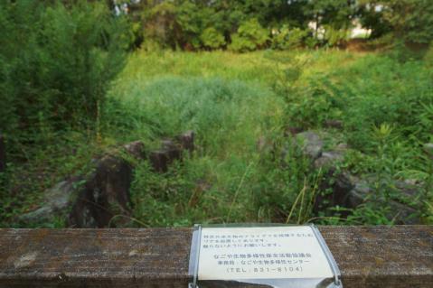 ヒル池20120729-6