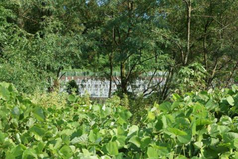 八ヶ村用水取水口20120826-7