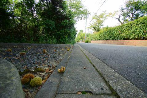 翠松園20121007-3