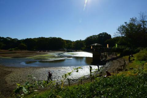 竜巻池水抜き20121110-1