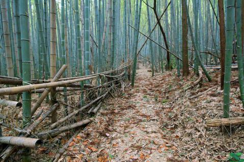 ほっぽ山20130106-3