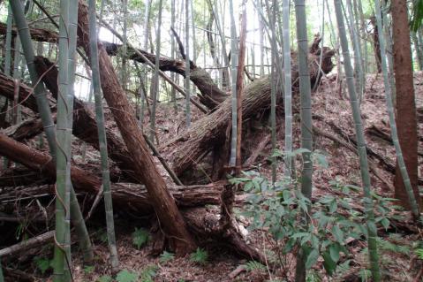 ほっぽ山20130217-2