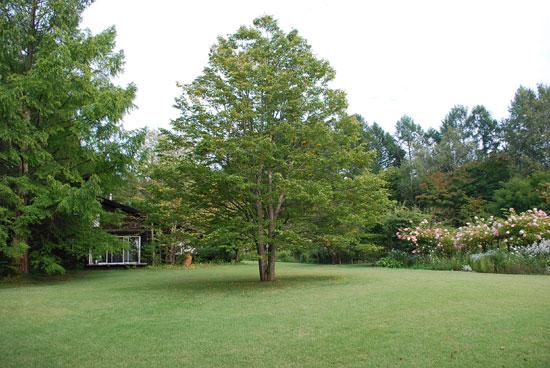 蓼科ガーデン 大きな木のあ