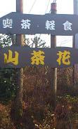 山茶花 (10)