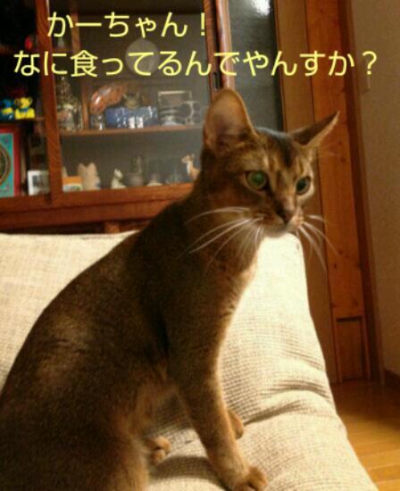 20121114_110919.jpg