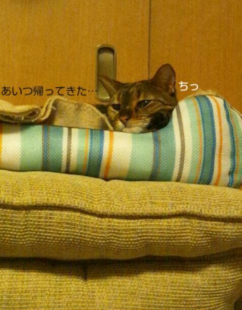 20121114_215411.jpg