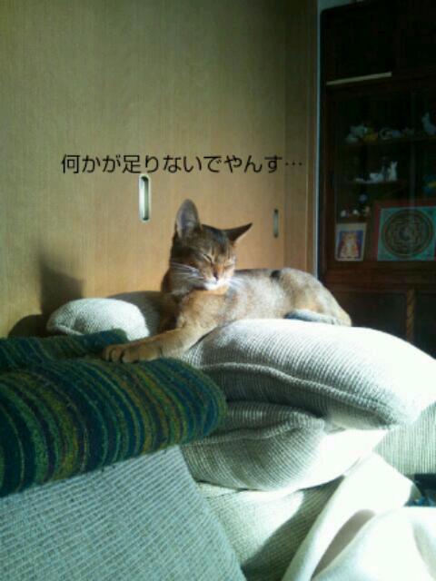 20121115_080758.jpg