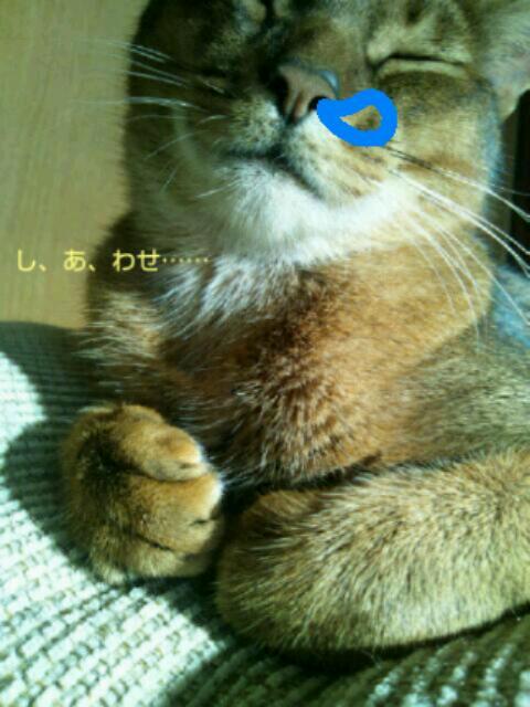 20121115_094551.jpg