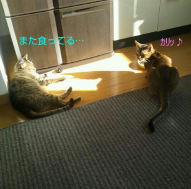 20121127_095237.jpg