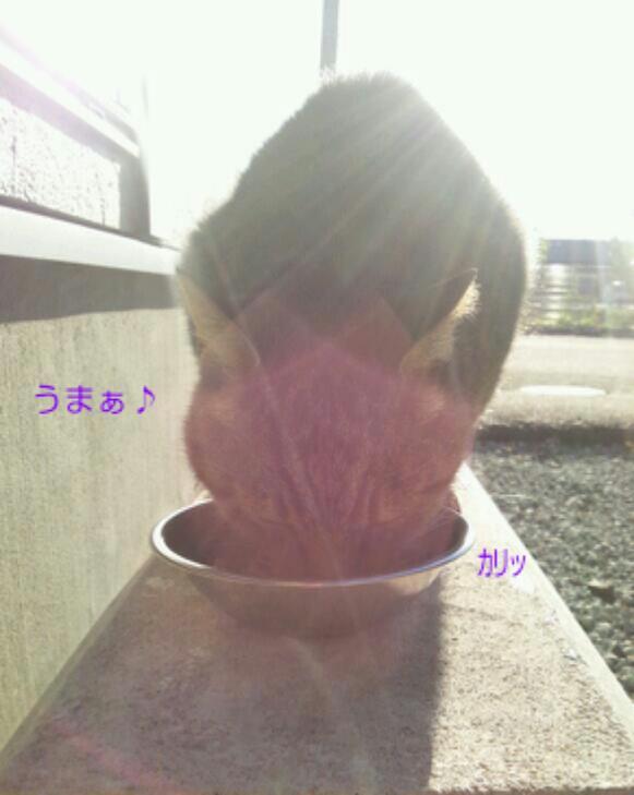 20121128_091556.jpg