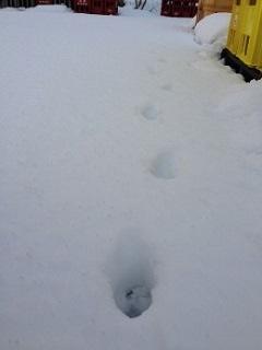 20131228雪3