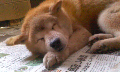 ぐっすり睡眠