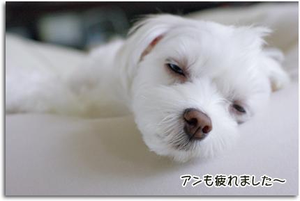 疲れました~