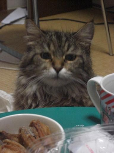 何食べてるにゃー(・ω・)