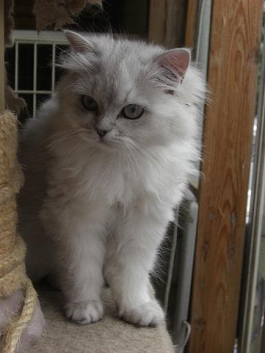 門司港猫カフェのネコさん