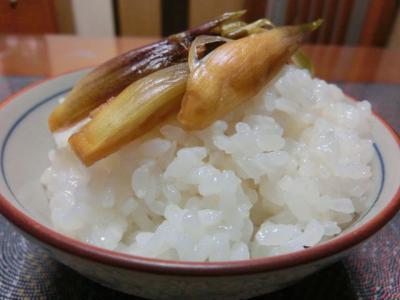 新米ご飯と醤油麹漬け