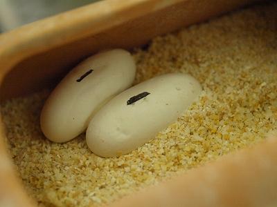 2012.5.6卵2