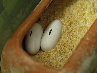 2012.5.26卵