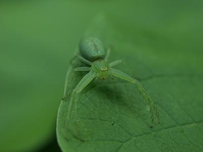 蜘蛛02 2012.6.9