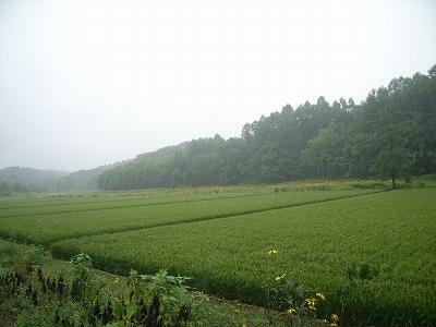 2012.8.20雨