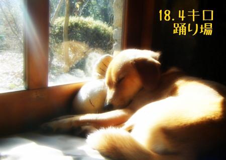 黄金の眠り