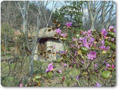 エゾムラサキと丸い石積みの小屋