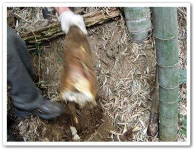竹の子堀り上げ