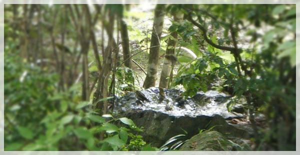 メジロの水浴び、拡大