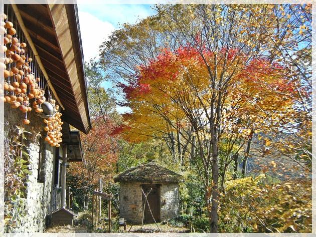石積みの丸い小屋とオオヤマモミジ