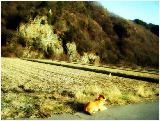 岸壁の冬枯れ