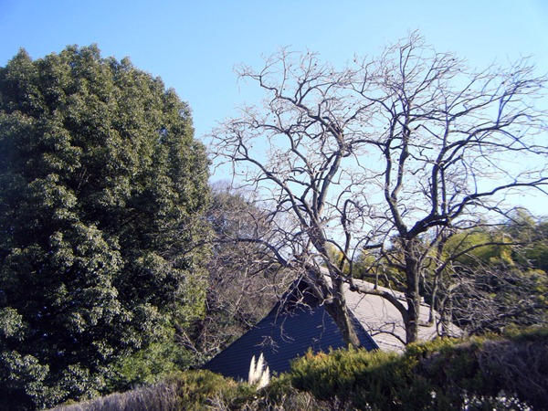 大きな屋根と防風林
