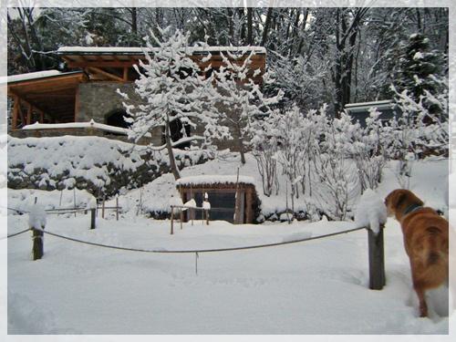 らくも一緒に雪景色
