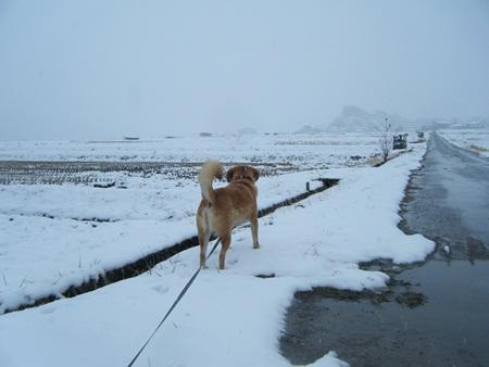 雪の田んぼ