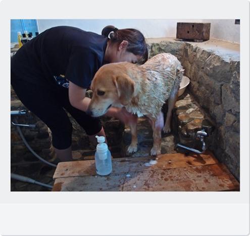 お風呂場で犬洗い