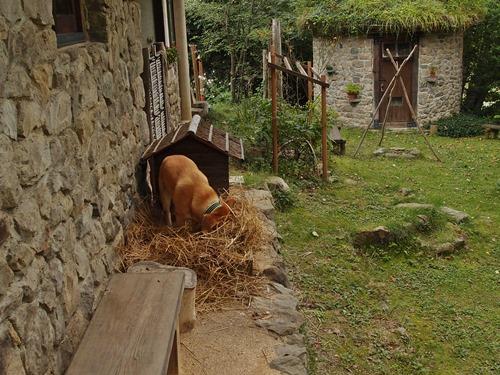 わらを掘る犬