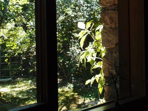 窓目の葉が光る午後