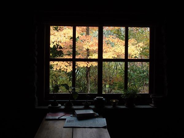 窓の外のハナノキ